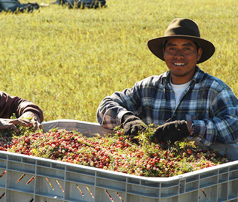 A cranberry grower smiles happily in a field